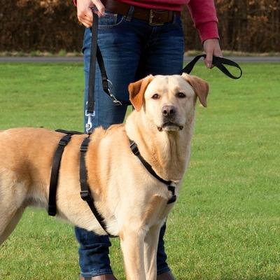 TRIXIE Ausbruchsicheres Hundegeschirr Stay von Trixie