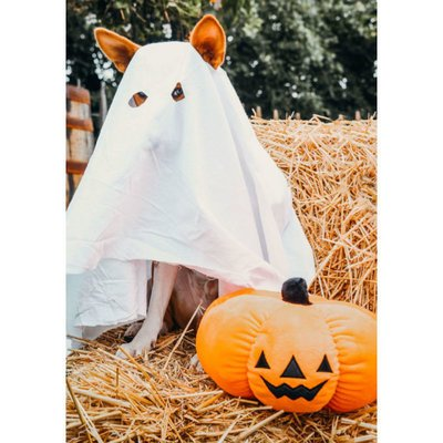 Beeztees Halloween Plüsch Kürbis Preview Image
