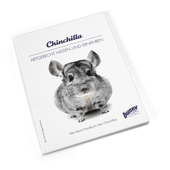 Bunny Book Chinchilla