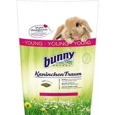 Bunny Kaninchen Traum young