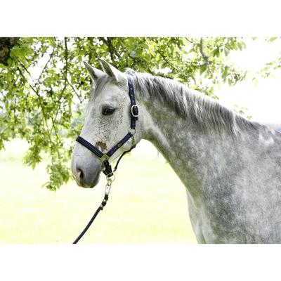 Covalliero Pferdehalfter Liam