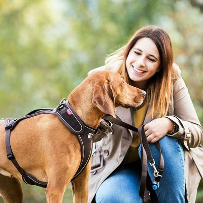 Curli Belka Geschirr für große Hunde Preview Image