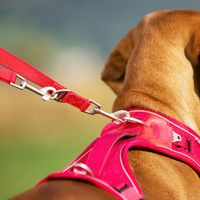 Curli Verstellbare Hundeleine Leine Nylon Preview Image