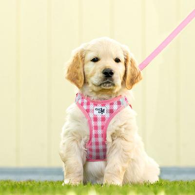Curli Vest Geschirr mit Leine Puppy Welpen Set Preview Image