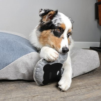 DREAM and DARE Bodenspielzeug für Hunde Preview Image