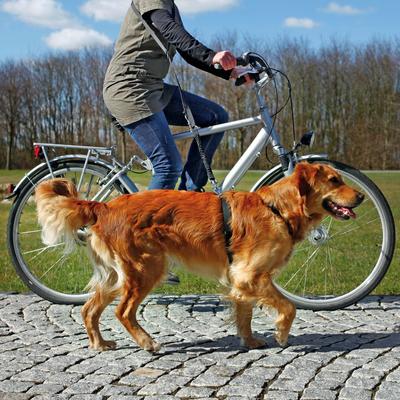 TRIXIE Fahrradleine und Joggingleine für Hunde