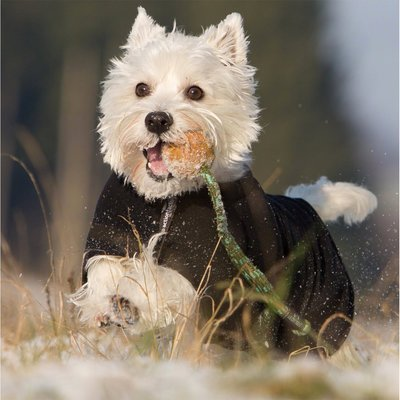 fit4dogs Warmup Cape Mini Classic Wende-Hundemantel