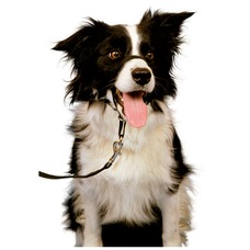 Company of Animals HALTI Hundehalfter Kopfgeschirr für Hunde Preview Image