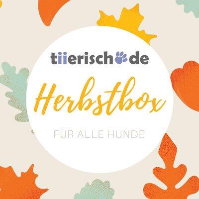 Herbstbox für Hunde
