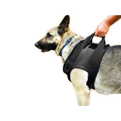 Julius K9 Hunde Gehhilfe für Vorderläufe