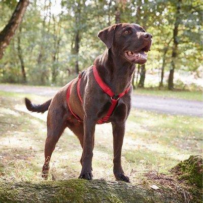 Wolters Hundegeschirr ausbruchsicher Professional No Escape Preview Image