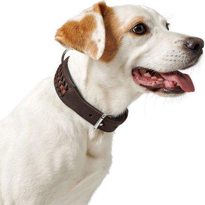 Hundehalsbänder Shop
