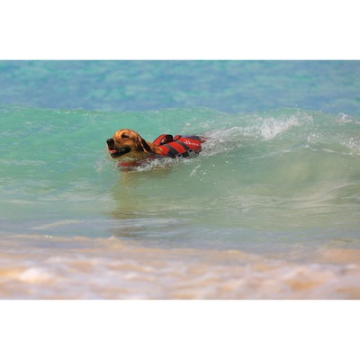 Hunter Hunde Schwimmweste Moss Preview Image