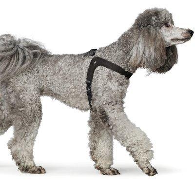 Hunter Hundegeschirr Leder Dimaro Preview Image