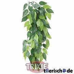 TRIXIE Terrarium Seidenpflanze, Ficus