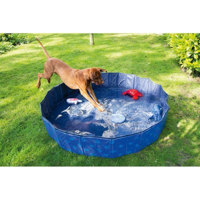 Karlie Doggy Pool Preview Image