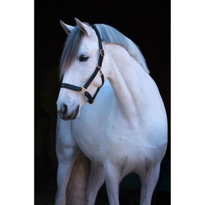 Covalliero Pferdehalfter Eco aus Leder