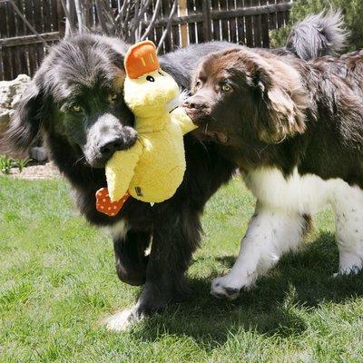 KONG Comfort Jumbo Hundespielzeug Preview Image