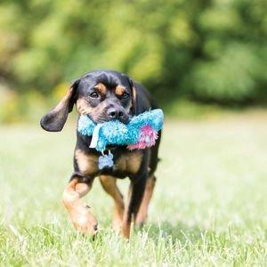 KONG Cozie Plüschtier für Hunde Preview Image