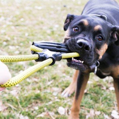 KONG Hundespielzeug Jaxx Preview Image