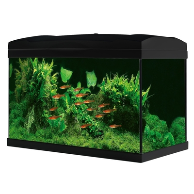 Marina Basic 54 Glasaquarium-Set