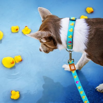 Max & Molly Original Kurzleine Ducklings Preview Image