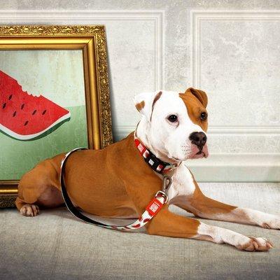 Max & Molly Original Kurzleine Watermelon Preview Image