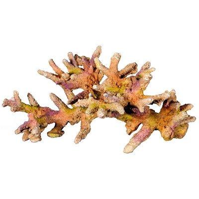 Nobby Farbige Koralle