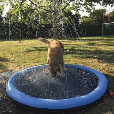 Nobby Splash Hundepool Preview Image