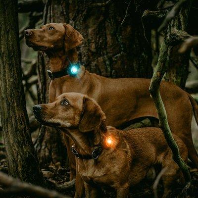 Orbiloc Dog Dual Safety Light Hundelicht Preview Image