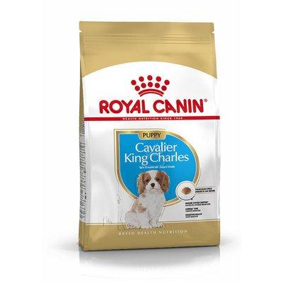 Royal Canin Cavalier King Charles Puppy Welpenfutter trocken