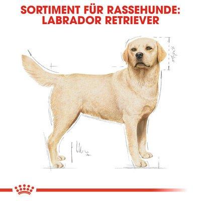Royal Canin Labrador Retriever Adult Hundefutter trocken Preview Image