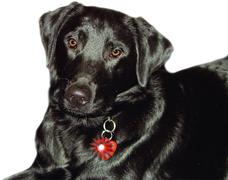 Super Blinki für Hunde in Herzform