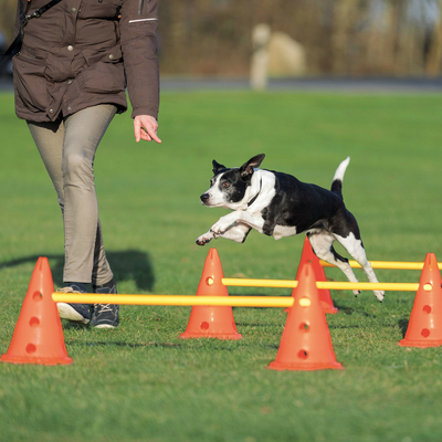Trixie Dog Activity Agility Hindernisse Pilonen