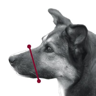 TRIXIE Maulschlaufe für Hunde aus Nylon Preview Image