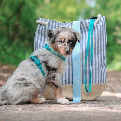 TRIXIE Premium Nylon Hundegeschirr Preview Image