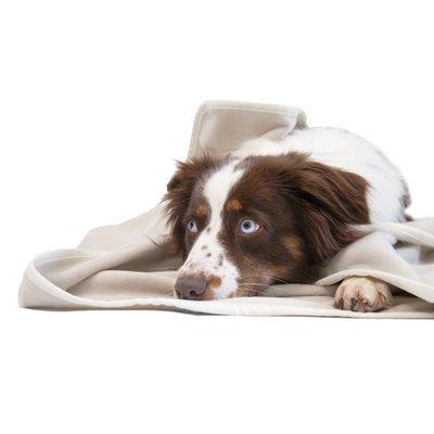 wauweich 95 Kuscheldecke für Hunde Preview Image