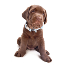 Hunter Welpenhalsband Vario Basic Puppy Alu-Strong Preview Image