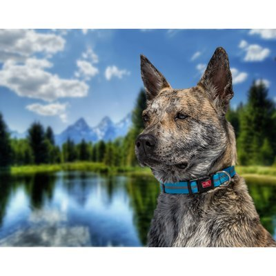 Wigzi wasserfestes Hundehalsband reflektierend