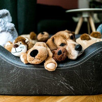 Wolters Hundesofa Hundebett VIP Lounge Kunstleder Preview Image