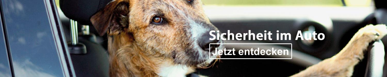 Hunde Sicherheit im Auto