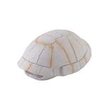 Landschildkröten-Skelett - 13 x 5,5 x 9 cm