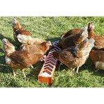 rot - für Hühner