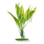 Amazon Sword Plant  - 8,5 x 3,7 x 25,8 cm