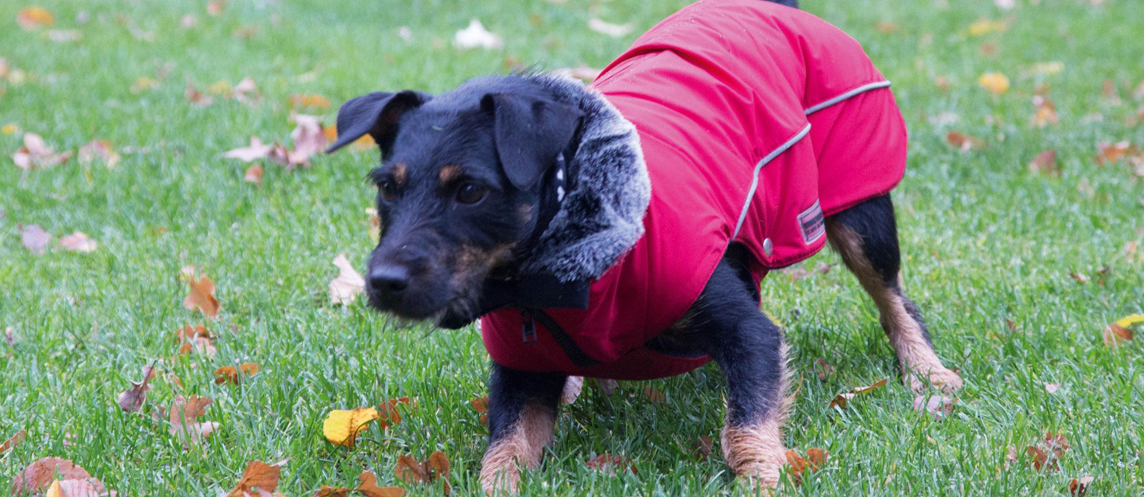 Wolters Hundemäntel Hundebekleidung Online Shop, Bild 3
