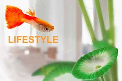 Fluval Lifestyle Dekoration und Zubehör