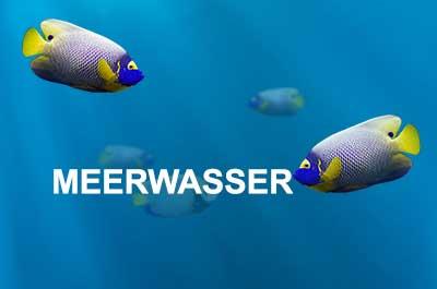 Fluval Meerwasser Aquarien und Zubehör