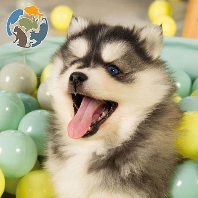 beeztees Hundespielzeug