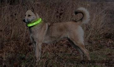 Leuchthalsbänder für Hunde