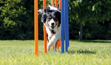 Hundeausbildung & Hundeerziehung